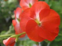 F?rgglade blommor i detalj och mjukt ljus fotografering för bildbyråer