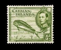 F?rgglade Cayman?arna portost?mplar arkivbild