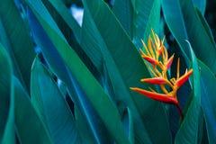 F?rgrik blomma f?r tropiska sidor p? m?rkt tropiskt m?rker f?r l?vverknaturbakgrund - gr?n l?vverknatur arkivfoton