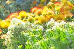 F?rgrik blomma som blommar med gr?n bladbakgrund arkivfoton