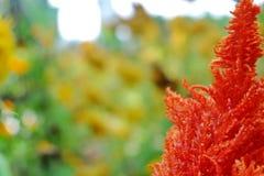 f?rgrik blommatr?dg?rd arkivbilder