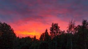 F?rgrik solnedg?ng i den molniga himlen ovanf?r den gr?na skogen arkivfoton