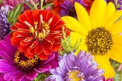 f?rgrika blommor royaltyfria foton