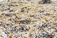 F?rgrika havsskal som bakgrund arkivbilder