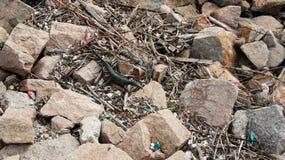 F?rorening av kust- ekosystem, naturlig plast- och str?nder royaltyfri fotografi