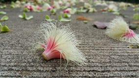 F?rsommar kommer med sk?nhet till blommor fotografering för bildbyråer