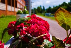 F?rst blomma av blommor i sommaren royaltyfri fotografi