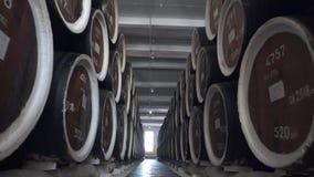 F?sser Kognak, Wein oder Whisky Auszug des Weinbrands in den Eichenf?ssern Alkohollager Hunderte von den F?ssern in stock video