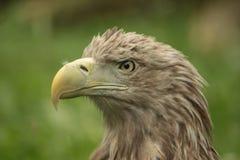 F18 Strike Eagle Royalty Free Stock Photo