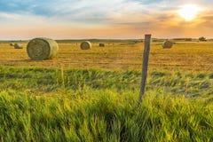 Faça feno a colheita Fotos de Stock Royalty Free