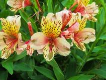 Faça-o gostam de flores imagem de stock royalty free