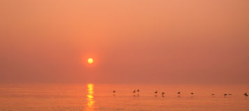 Por do sol do pelicano foto de stock royalty free