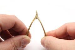 Faça um desejo no Wishbone Fotos de Stock Royalty Free