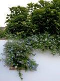Façade avec du bois de solanum Photographie stock