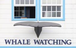 Façade de observation de bâtiment de baleine avec le conte de baleine aux Açores Portug Images libres de droits