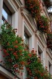 Façade du bâtiment avec des fleurs sur des fenêtres photos libres de droits