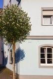 façades de ville au boulevard historique photo stock
