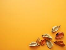 Faînes sur le fond orange Images libres de droits