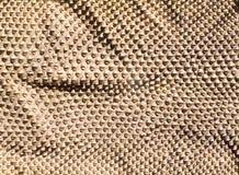Fałdowa prawdziwa wąż skóry skóra dla tekstury i tła Fotografia Stock