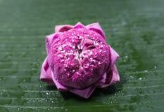 Fałdowych płatków różowy lotos Zdjęcie Stock