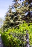 Fałszujący grilla ogrodzenie i jadł dorośnięcie za ona w Novosibirsk, Rosja zdjęcia stock