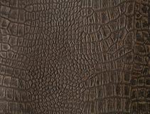 fałszywy skóry aligatora zdjęcia stock