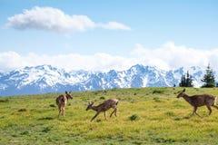 Fa nelle montagne Fotografia Stock