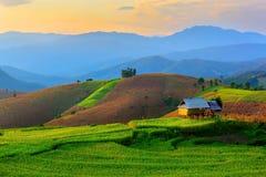 Fa un passo il giacimento del riso a Chiangmai Fotografie Stock