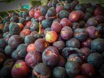 Faalsha un tipo frutas, seerat y fruta amarga de la baya del gusto foto de archivo libre de regalías
