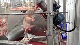 Fabbrica cascer del pollo stock footage