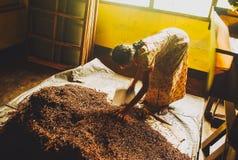 Fabbrica del tè nello Sri Lanka Immagini Stock