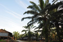 Fabbrica della palma da olio Fotografia Stock Libera da Diritti