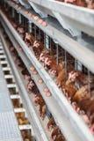 Fabbrica moderna del pollame immagini stock libere da diritti