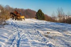 Fabbricazione del fieno nell'inverno in Carpathians Fotografia Stock