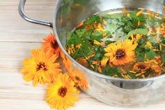 Fabbricazione dell'unguento organico della calendula in vaso fotografia stock