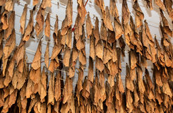 Fabbricazione di tabacco immagini stock libere da diritti