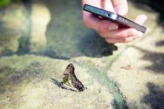 Fabbricazione immagine della farfalla Fotografie Stock Libere da Diritti