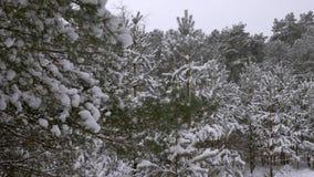 Fabelachtig mooi de winter naaldbos stock footage