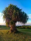 Fabelachtige palm op een golfgebied royalty-vrije stock foto's