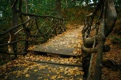 Fabelhafte Brücke von den perepleteny Baumstümpfen in der Herbstwaldnaturreservat-Teufel ` s alten Regelung in der Kaluga-Region stockfotos