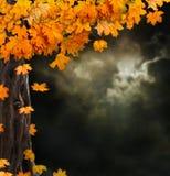 Fabelhafte Nachtlandschaft, alte Bäume Stockfotografie