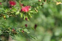 Fabelhafte rosa Blume stockfotografie