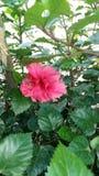 Fabelhafter Schuss der Blume stockfotografie