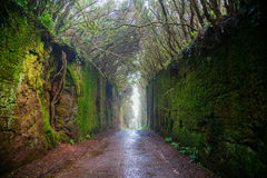 Fabelhafter Tunnel im ländlichen Park Anaga Stockfotografie