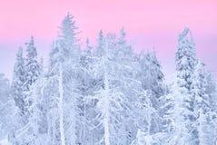 Fabelhafter Weihnachtswinterwald bei Sonnenuntergang, alles wird mit Schnee bedeckt Kiefer und gezierte Bäume bedeckt im Schnee b Lizenzfreies Stockfoto