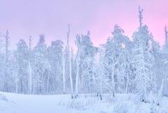 Fabelhafter Weihnachtswinterwald bei Sonnenuntergang, alles wird mit Schnee bedeckt Kiefer und gezierte Bäume bedeckt im Schnee b Stockfoto