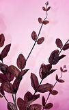 silk leaves Royalty Free Stock Photography