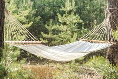 Fabric hammock strung between two pines in forest Royalty Free Stock Photography