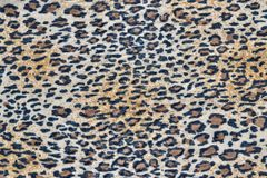 Fabric with a leopard pattern Royalty Free Stock Photo