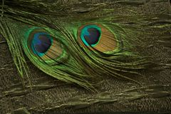 Fabric and peacock feathers Stock Images
